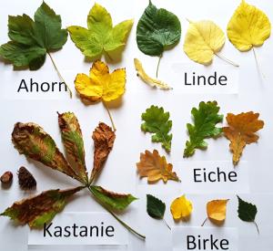 Grundschulblog Sachunterricht Herbstprojekt Baumarten