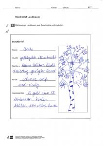 Sachunterricht Herbstprojekt: Steckbrief Laubbaum