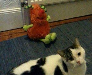 Come in Funny und Katze Bunny
