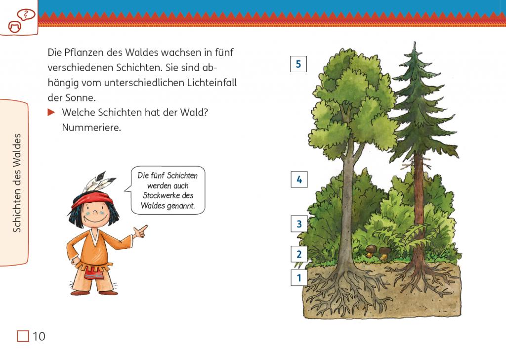 Meine Indianerheft Wald 3/4, Seite 10, Schichten des Waldes