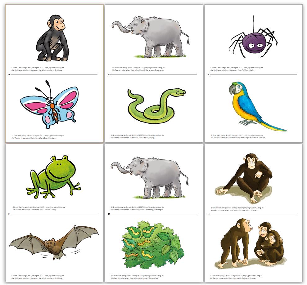 Monkey Puzzle – Ideen für den Unterricht und kostenlose Materialien