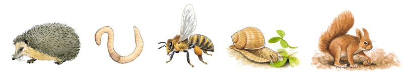 Illustrationen Tiere Hecke